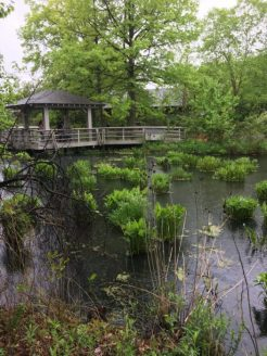 Review: Visiting the New York Botanical Gardens for Mother's Day 2018